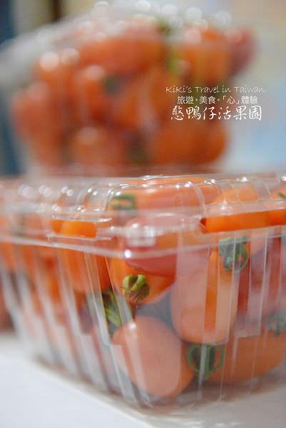 憨鴨仔活果園_無農藥番茄